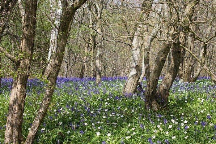 Woodland countryside_Location still matters.jpg