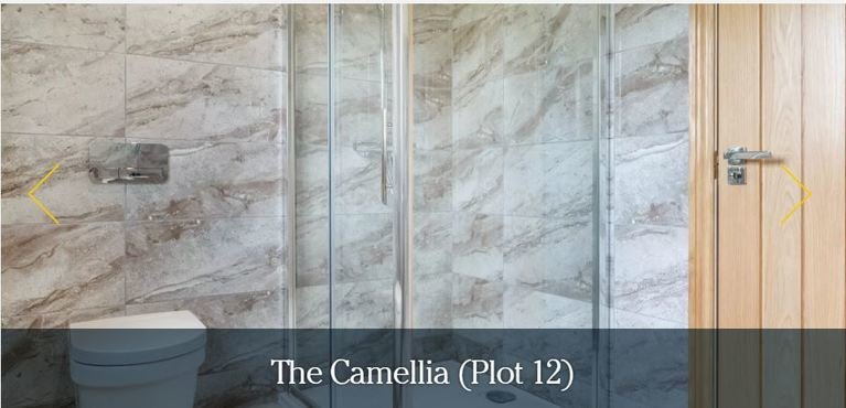 The camellia shower